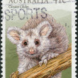 Stock Photo: AUSTRALI- CIRC1990: Postage stamp printed in Australishows marsupial, greater glider (Petauroides volans), circ1990