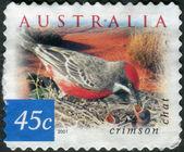 AUSTRALIA - CIRCA 2001: Postage stamp printed in Australia, shows bird Crimson Chat (Epthianura tricolor), circa 2001 — Stock Photo