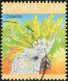 AUSTRALIA - CIRCA 1987: Postage stamp printed in Australia, shows bird Sulphur-crested Cockatoo (Cacatua galerita), circa 1987 — Stock Photo
