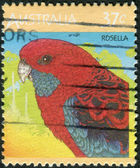 AUSTRALIA - CIRCA 1987: Postage stamp printed in Australia, shows bird Crimson Rosella (Platycercus elegans), circa 1987 — Stock Photo