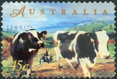 AUSTRALIA - CIRCA 1998: Postage stamp printed in Australia, dedicated to Farming in Australia, shows Dairy cattle, man on motorcycle, circa 1998 — Stock Photo