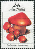 AUSTRALIA - CIRCA 1981: Postage stamp printed in Australia shows a poisonous mushroom Cortinarius cinnabarinus, circa 1981 — Stock Photo