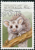 AUSTRALIA - CIRCA 1990: Postage stamp printed in Australia shows a marsupial, the greater glider (Petauroides volans), circa 1990 — Stock Photo