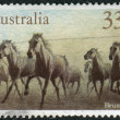 Stock Photo: AUSTRALI- CIRC1986: Postage stamp printed in Australia, shows herd of feral horses Brumby, circ1986
