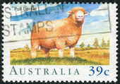 AUSTRALIA - CIRCA 1989: Postage stamp printed in Australia, dedicated to World Sheep and Wool Congress, Tasmania, shows a sheep breed Poll Dorset, circa 1989 — Stock Photo