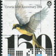 AUSTRALIA - CIRCA 1984: Postage stamp printed in Australia, dedicated Settlement of Victoria Sesquicentenary, shows Helmeted Honeyeater, circa 1984 — Stock Photo #40704365