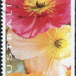 "AUSTRALIA - CIRCA 1994: Postage stamp printed in Australia, ""Thinking of You"" Issue, shows Poppies, circa 1994 — Stock Photo #40705673"