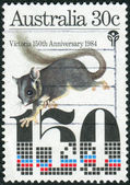 AUSTRALIA - CIRCA 1984: Postage stamp printed in Australia, dedicated Settlement of Victoria Sesquicentenary, shows Leadbeater's possum, circa 1984 — Stock Photo