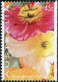 "AUSTRALIA - CIRCA 1994: Postage stamp printed in Australia, ""Thinking of You"" Issue, shows Poppies, circa 1994 — Stock Photo"