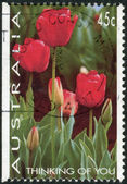 "AUSTRALIA - CIRCA 1994: Postage stamp printed in Australia, ""Thinking of You"" Issue, shows Tulips, circa 1994 — Stock Photo"