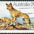 Stock Photo: AUSTRALI- CIRC1980: Postage stamp printed in Australishows Dingo (Canis lupus dingo), circ1980