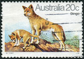 AUSTRALIA - CIRCA 1980: Postage stamp printed in Australia shows the Dingo (Canis lupus dingo), circa 1980 — Stock Photo