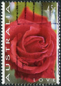 "AUSTRALIA - CIRCA 1994: Postage stamp printed in Australia, ""Thinking of You"" Issue, shows Rose, circa 1994 — Stock Photo"