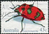 AUSTRALIA - CIRCA 1991: Postage stamp printed in Australia shows Cotton harlequin bug (Tectocoris diophthalmus), circa 1991 — Stock Photo
