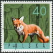 Postage stamp printed in Poland, shows a Red fox (Vulpes vulpes) — Stock Photo