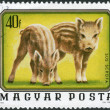 Stock Photo: Postage stamp printed in Hungary, shows Wild boars