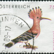 Stock Photo: AUSTRI- CIRC2008: Postage stamp printed in Austria, shows bird Hoopoe (Upupepops), circ2008