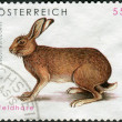 AUSTRIA - CIRCA 2008: Postage stamp printed in Austria, shows the European hare (Lepus europaeus), circa 2008 — Stock Photo #42065025