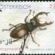 AUSTRIA - CIRCA 2007: Postage stamp printed in Austria, shows beetle Lucanus cervus, circa 2007 — Stock Photo