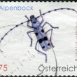 Stock Photo: AUSTRI- CIRC2009: Postage stamp printed in Austria, shows beetle Rosalilongicorn (Rosalialpina), circ2009