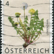 Stock Photo: AUSTRI- CIRC2007: Postage stamp printed in Austria, shows Common Dandelion (Taraxacum Officinale), circ2007