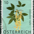 Stock Photo: AUSTRI- CIRC2007: Postage stamp printed in Austria, shows Scotch Laburnum (Laburnum Alpinum), circ2007