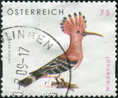 AUSTRIA - CIRCA 2008: Postage stamp printed in Austria, shows bird Hoopoe (Upupa epops), circa 2008 — Stock fotografie