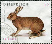 AUSTRIA - CIRCA 2008: Postage stamp printed in Austria, shows the European hare (Lepus europaeus), circa 2008 — Foto de Stock