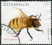 AUSTRIA - CIRCA 2009: Postage stamp printed in Austria, shows the Western honey bee (Apis mellifera), circa 2009 — Stok fotoğraf