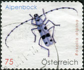 AUSTRIA - CIRCA 2009: Postage stamp printed in Austria, shows beetle Rosalia longicorn (Rosalia alpina), circa 2009 — Stock Photo
