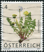 AUSTRIA - CIRCA 2007: Postage stamp printed in Austria, shows the Common Dandelion (Taraxacum Officinale), circa 2007 — Stock Photo