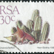 Postage stamp printed in South Africa, shows a plant Tavaresia barklyi — Stock Photo