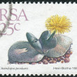 Postage stamp printed in South Africa, shows a plant Cheiridopsis peculiaris — Stock Photo