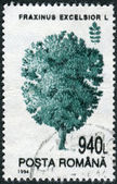 Postage stamp printed in Romania shows a tree Common Ash (Fraxinus excelsior) — Stock Photo