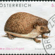 Postage stamp printed in Austria, shows a southern white-breasted hedgehog (Erinaceus concolor) — Stock Photo