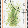 Stock Photo: Postage stamp printed in Sao Tome and Principe, shows medicinal plant Cymbopogon citratus