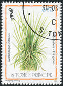 Postage stamp printed in Sao Tome and Principe, shows a medicinal plant Cymbopogon citratus — Stock Photo