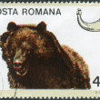 Postage stamp printed in Romania, shows a brown bear (Ursus arctos) — Stock Photo #42991091