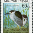 Postage stamp printed in Hungary, shows a Black-crowned night heron (Nycticorax nycticorax) — Stock Photo
