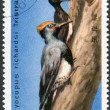 Postage stamp printed in North Korea, shows White-bellied Woodpecker (Great Black Woodpecker (Dryocopus javensis)) — Stock Photo #42994071