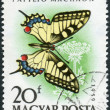 Postage stamp printed in Hungary, shown butterfly Old World Swallowtail (Papilio machaon) — Stock Photo #42994763
