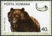 Postage stamp printed in Romania, shows a brown bear (Ursus arctos) — Stock Photo