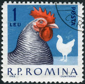 Postage stamp printed in Romania shows hen — Stock Photo