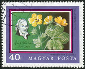 Postage stamp printed in Hungary, devoted to the 200th anniversary of the Botanical Garden of the University of Budapest, shown Jacob Joseph Winterl and Waldsteinia geoides — Stock Photo
