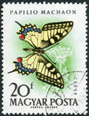 Postage stamp printed in Hungary, shown butterfly Old World Swallowtail (Papilio machaon) — Stock Photo