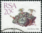 Postage stamp printed in South Africa, shows cactus Conophytum mundum — Stock Photo