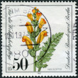 Postage stamp printed in Germany (West Berlin), shows a flowering Pedicularis sceptrum-carolinum — Stock Photo #51151931