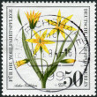 Postage stamp printed in Germany (West Berlin), shows a flowering Gagea arvensis — Stock Photo #51152195