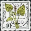 Postage stamp printed in Germany (West Berlin), shows a bloom Calla palustris — Stock Photo #51207573