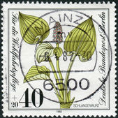 Postage stamp printed in Germany (West Berlin), shows a bloom Calla palustris — Stock Photo